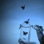 butterflies out of jar